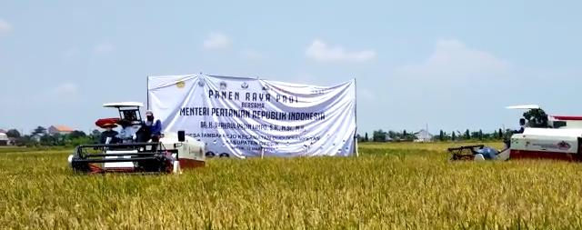 Menteri Pertanian dan Gubernur Jawa Timur Panen Padi di Gresik
